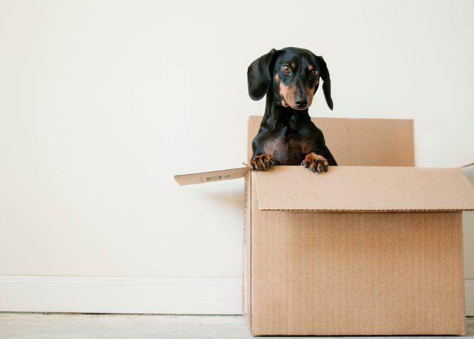 carton-chien